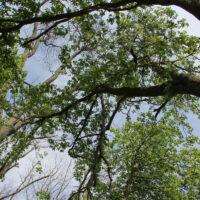 Canopy Closing