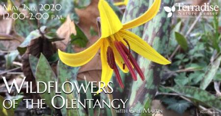 Wildflowers OTO
