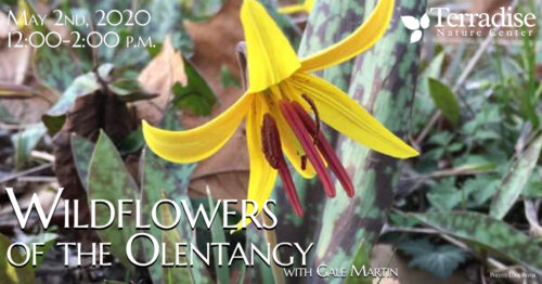 Wildflowers OTO