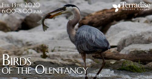 bird OTO