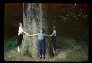 Boundary Oak at Lincoln's Birthplace, Kentucky August 1956